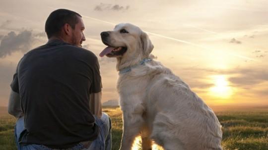 A kutya az ember legjobb barátja – sajnos azonban nem mindenki gondolja így
